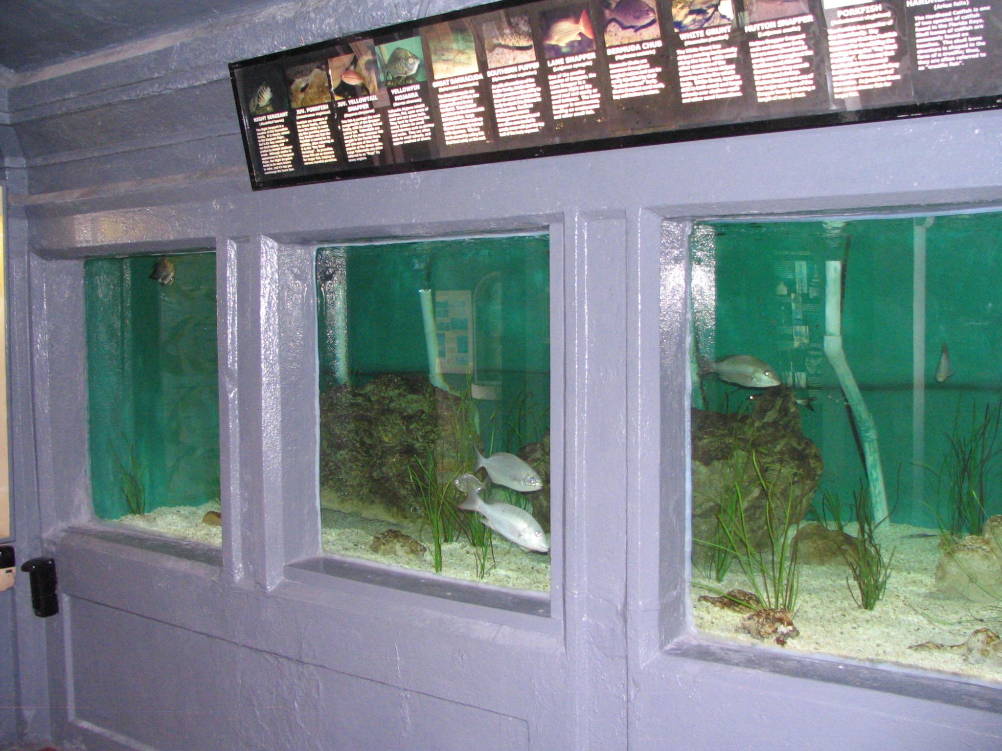 Key West Aquarium Duval Street St Key West